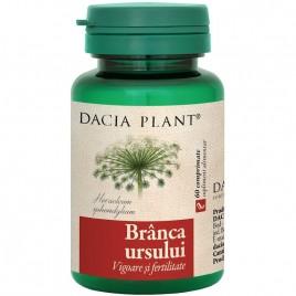 Branca Ursului 60cmp Dacia Plant