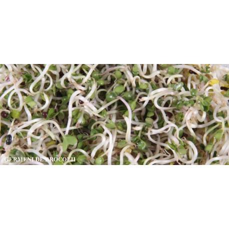 Germeni Brocoli 50g Germalex