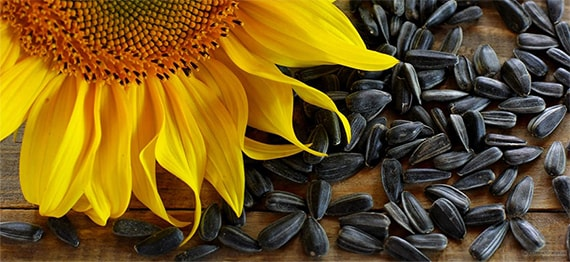 Seminte de floarea-soarelui