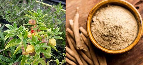 Ashwagandha – beneficii ale celei mai cunoscute plante adaptogene