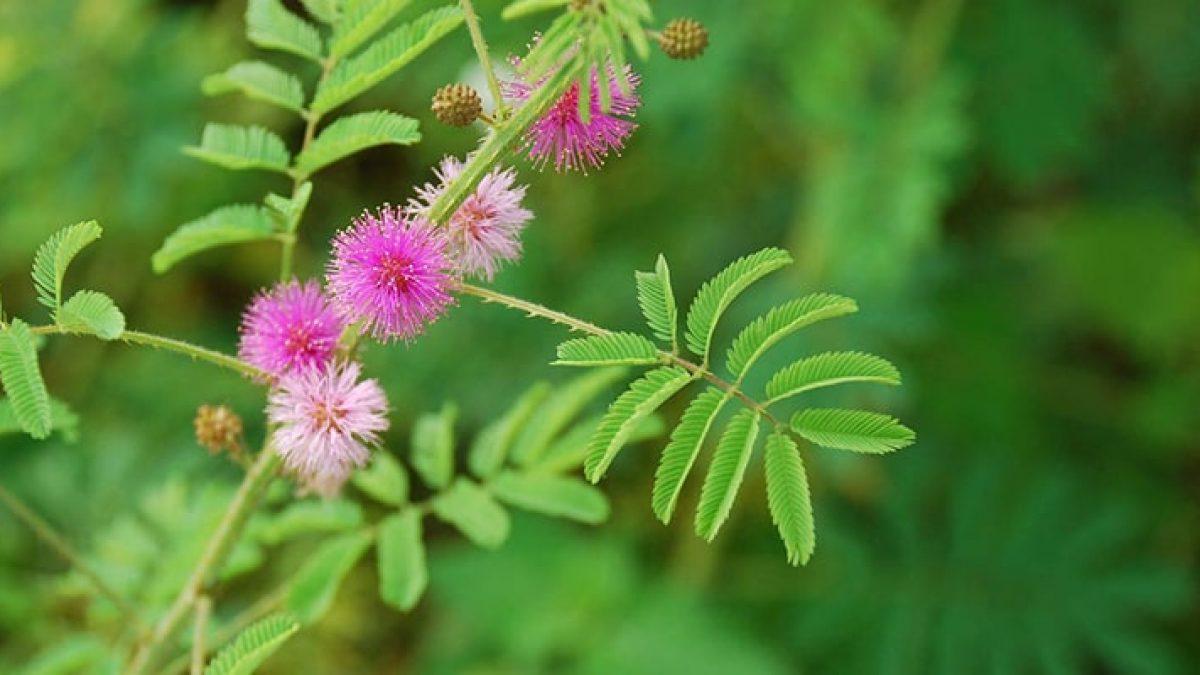 plante medicinale pentru tratarea rănilor articulare)
