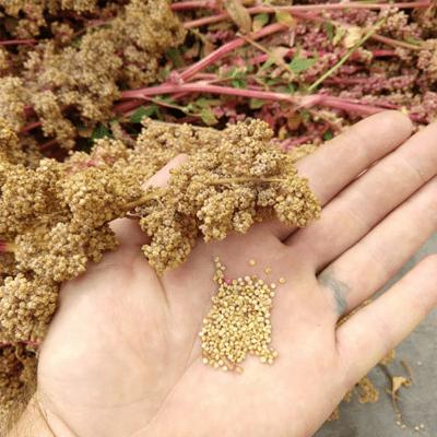ce-este-quinoa