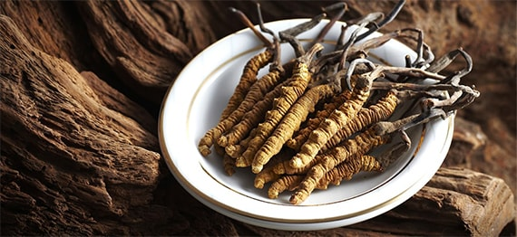 Ciuperca Tibetana cordyceps sinensis - un parazit cu beneficii spectaculoase