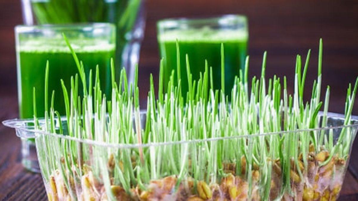 viziune de iarbă de grâu
