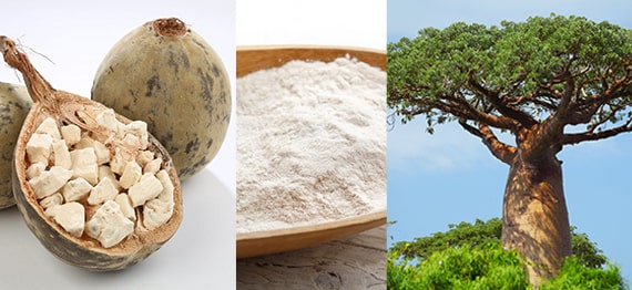 Pudra de Baobab - beneficii pentru sanatate ale acestei minuni tropicale